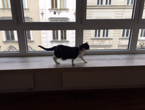 Piklz explores her new apartment, with window ledges everywhere.